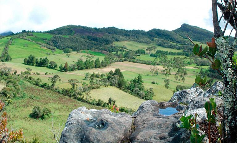 Bosque de Encillo en Guasca